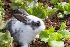 Bunny in garden Stock Photo