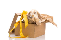 Bunny in a gift box with a yellow ribbon Stock Photography