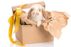Bunny in a gift box with a yellow ribbon Royalty Free Stock Photo