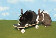 Bunny Gives en portionhand arkivbilder