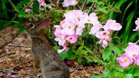 Bunny Grabbing a Leaf Stock Image