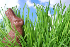 Bunny in the Grass. Chocolate Easter bunny hiding in real grass under a blue sky stock image
