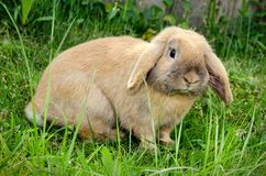Bunny in grass Royalty Free Stock Images