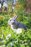 Bunny on grass Stock Image