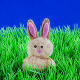 Bunny in grass Stock Photography