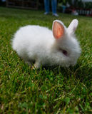 Bunny in the grass Royalty Free Stock Image