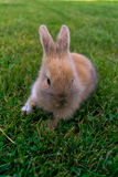 Bunny in the grass stock photo