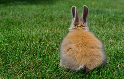 Bunny in the grass royalty free stock photography