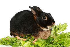 Bunny in green salad leaves Stock Photo