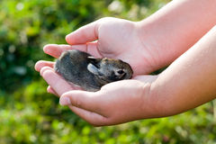Bunny in hands Royalty Free Stock Photo