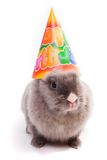 Bunny in a happy birthday cap. Isolated royalty free stock photo