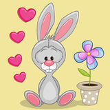Bunny with heart and flower Royalty Free Stock Images