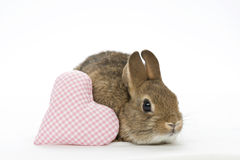 Bunny with heart Royalty Free Stock Images