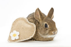 Bunny with heart Royalty Free Stock Photos