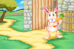 A bunny holding a carrot outside the barn Royalty Free Stock Images