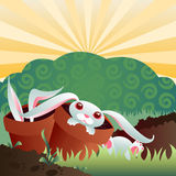 Bunny Infested Garden Stock Image