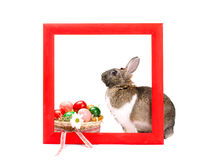 Bunny inside red wooden frame Royalty Free Stock Photos