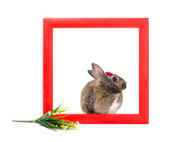 Bunny inside red wooden frame Stock Photos