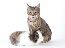 Bunny and kitten, isolated Stock Images