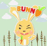 Bunny Stock Photos