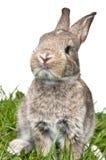 Bunny looking towards camera Royalty Free Stock Images