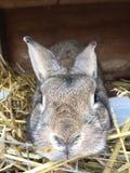 Bunny Love Fotografía de archivo