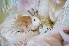 Bunny lying on velvet cushions Stock Photos