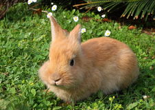 Bunny in the meadow Stock Photo