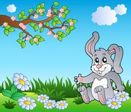 Bunny on meadow with daisies Stock Images
