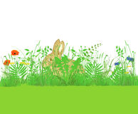 Bunny in Meadow of Flowers Royalty Free Stock Images
