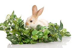 Bunny in the midst of green foliage Royalty Free Stock Photo