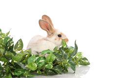 Bunny in the midst of green foliage Royalty Free Stock Photos