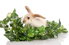 Bunny in the midst of green foliage Stock Image
