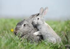 Bunny mom and baby rabbit Stock Photos