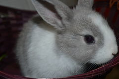 Bunny Royalty Free Stock Image