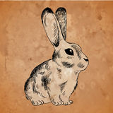 Bunny on an old paper background Royalty Free Stock Photos