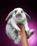 Bunny On Pink Background Royalty Free Stock Image