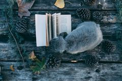 Bunny pet and Book on a wooden table with coffee and pines outdo Royalty Free Stock Image