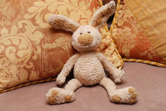 Bunny and pillows Stock Image