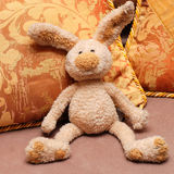 Bunny and pillows Royalty Free Stock Images