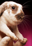 bunny on pink  background Royalty Free Stock Photos