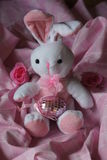 Bunny in the Pink Stock Images