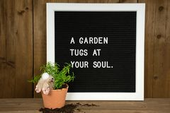 Bunny in plant pot with garden quote Royalty Free Stock Images