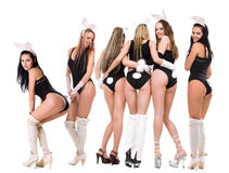 Bunny Playgirls Stock Images