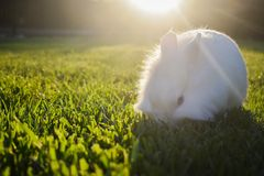Bunny playing in the grass. Cute white bunny playing in the grass, on a sunny day stock images