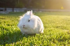 Bunny playing in the grass royalty free stock image