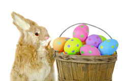bunny with polka dot Easter eggs Royalty Free Stock Images