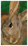 Bunny portrait. Vertical portrait of wild rabbit on green background Stock Photo