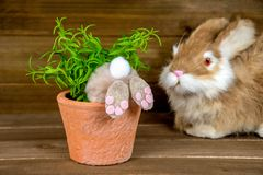 Bunny in potted plant Stock Photo