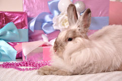 Bunny with presents Stock Image